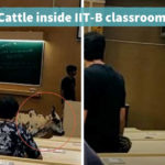 Image result for Stray cow enters IIT Bombay classroom
